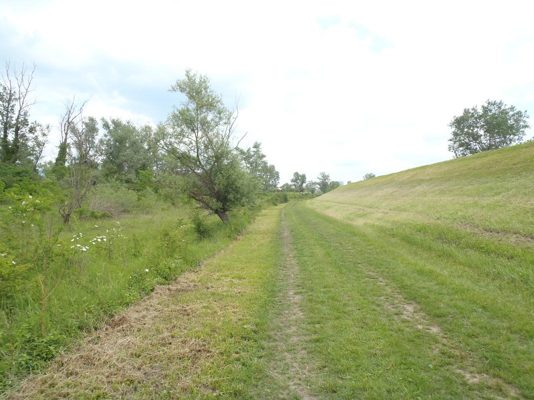 Detalj uz nasip i šumu oko nagnute travnate staze