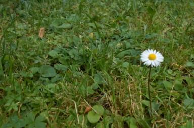 cvijetic